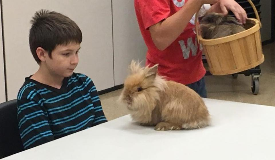 4H Rabbit Club